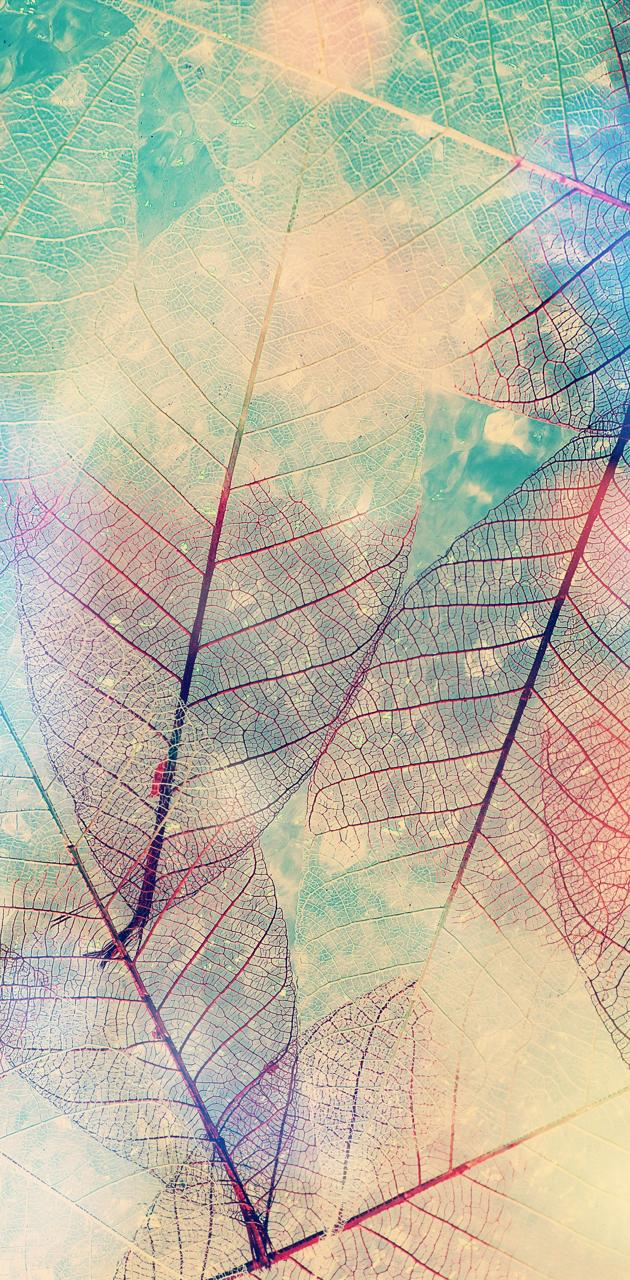 Faded Leaves