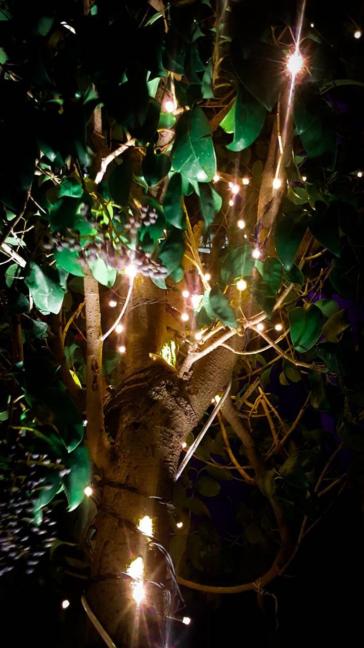 Christmas Tree Agac