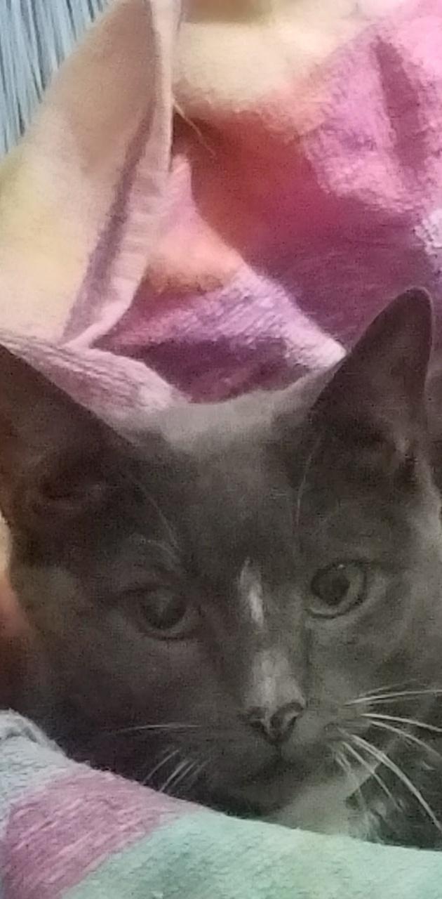 Mz Kitty