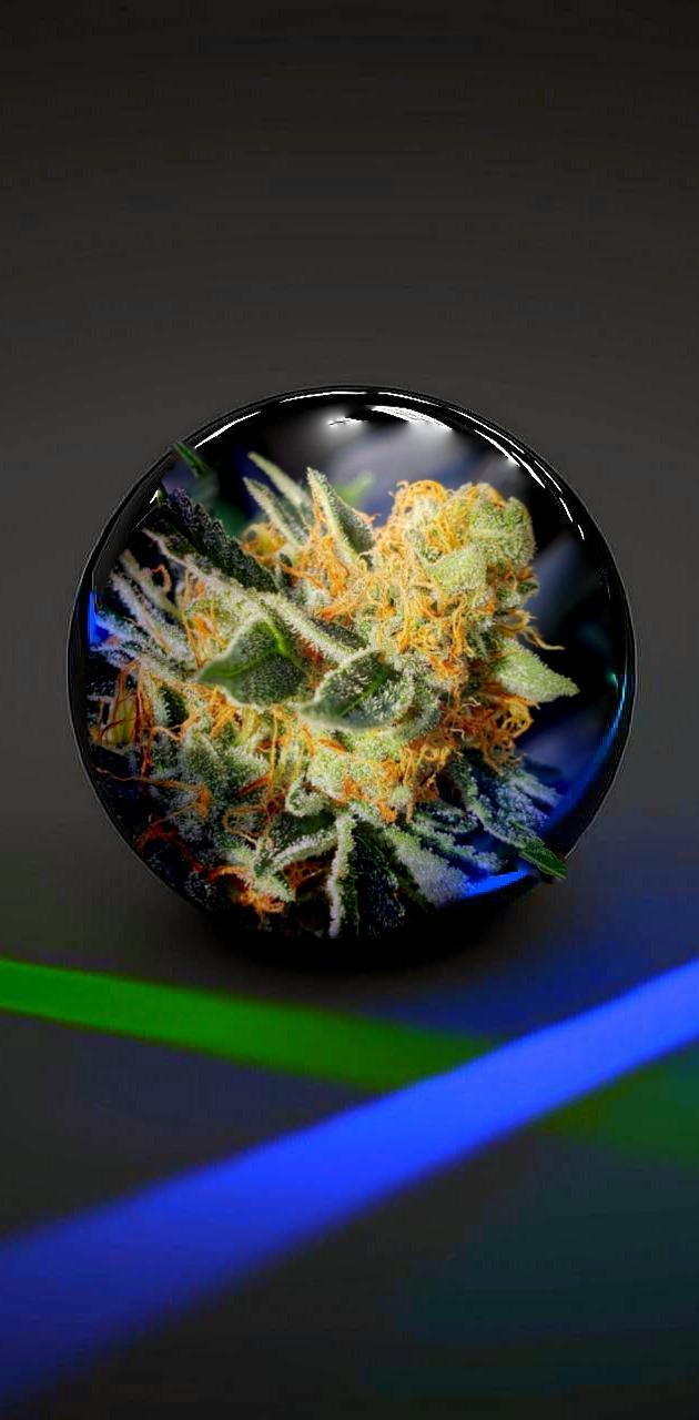 Bud ball