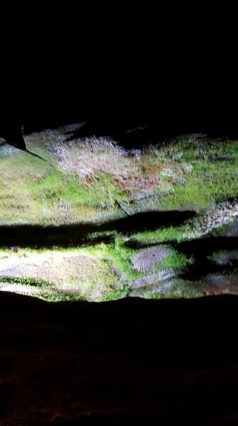 Cave moss